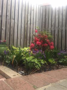 Garden and Patios